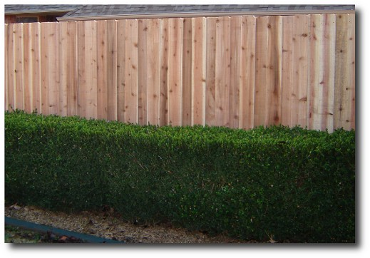 Decorative absolute privacy fence panel installed, 6' foot high x 8' foot wide, cedar pickets and redwood back rail stringers
